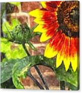 Sunflower 2 Sf2wc Canvas Print