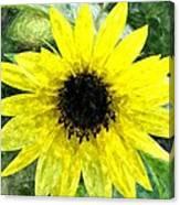 Sunflower 5 Sf5wc Canvas Print