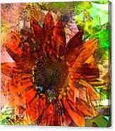 Sunflower 7 Canvas Print