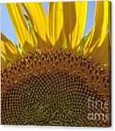 Sunflower Arch Canvas Print