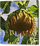 Sunflower At Fall Canvas Print