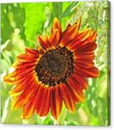Sunflower Beauty Canvas Print