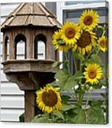 Sunflower Bird Feeder Canvas Print