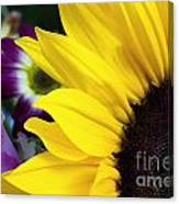 Sunflower Closeup Canvas Print