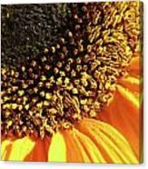 Sunflower Edge Canvas Print