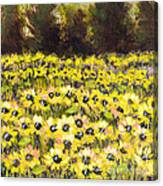 Sunflower Field Series W Silver Leaf By Vic Mastis Canvas Print