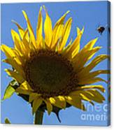 Sunflower For Snack Canvas Print
