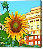 Sunflower In The City Canvas Print