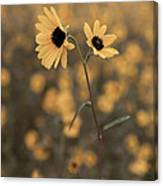 Sunflower In The Wild Canvas Print