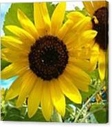 Sunflower Medley Canvas Print