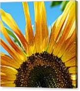 Sunflower Meets Sky Canvas Print