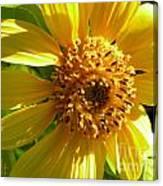 Sunflower No.11 Canvas Print