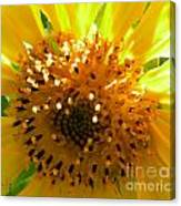 Sunflower No.16 Canvas Print