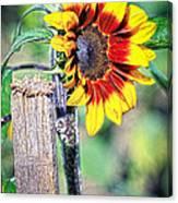 Sunflower On A Stick Canvas Print