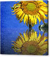 Sunflower Reflection Canvas Print