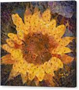 Sunflower Season Canvas Print