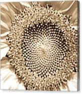 Sunflower Seeds Canvas Print