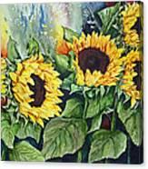 Sunflower Serenade Canvas Print