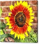 Sunflower Sfwc Canvas Print
