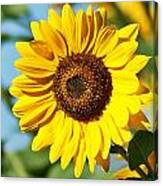 Sunflower Small File Canvas Print