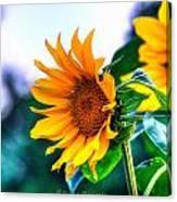 Sunflower Smile Canvas Print