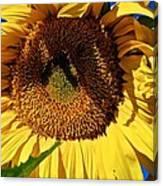 Sunflower Up Close Canvas Print