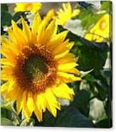 Sunflower Visitor Canvas Print