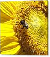 Sunflower With Bee Canvas Print