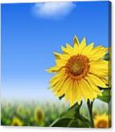 Sunflowers, Artwork Canvas Print