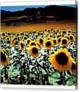 Sunflowers At Dusk Canvas Print