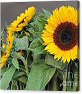 Sunflowers At Pikes Market Canvas Print