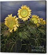 Sunflowers Digital Painting Canvas Print
