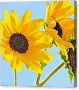 Sunflowers Sky Canvas Print