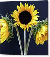 Sunflowers Three Canvas Print