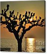 Sunlight And Tree Canvas Print