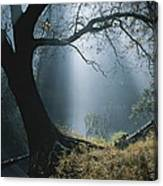 Sunlight Beams Through The Treetops Canvas Print