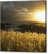 Sunlight Glowing At Sunset And Canvas Print