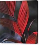 Sunlight Illuminates The Red Leaves Canvas Print