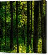 Sunlight In Forest Canvas Print