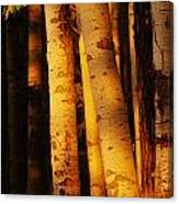 Sunlight On Aspen Trees, Twin Falls Canvas Print