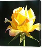 Sunlight On Yellow Rose Canvas Print