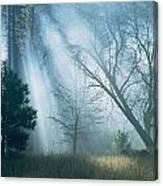Sunlight Pierces The Morning Mist Canvas Print