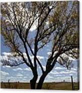 Sunlight Through The Tree Canvas Print