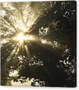 Sunlight Through Tree Cahir, County Canvas Print