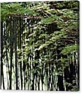 Sunlit Bamboo Canvas Print