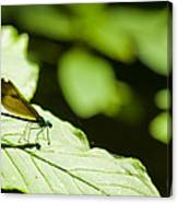 Sunlit Dragonfly Canvas Print