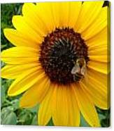 Sunny Bee Canvas Print