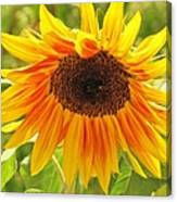 Sunny Bright Sunflower Canvas Print