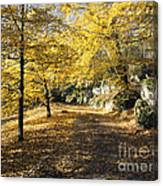 Sunny Day In The Autumn Park Canvas Print