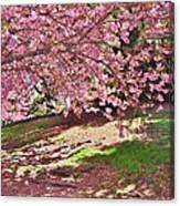 Sunny Patch Under The Cherry Trees Canvas Print
